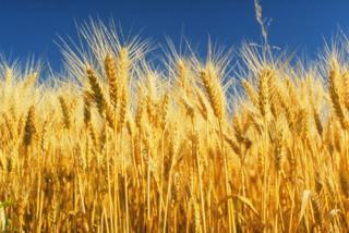 Бизнес план в сфере сельского